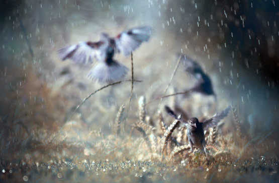 rainphotos20 in 35 (Really) Beautiful Examples of Rain Photography