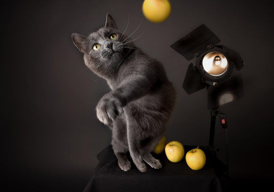 Cat Perfectly Timed Animal Photography