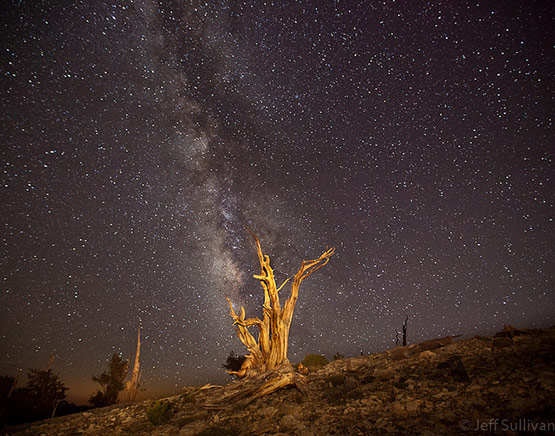 Perseids Meteor Shower August 2010, Milky Way Over Bristlecone Pine