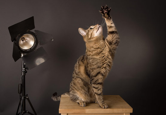 Training Cat Photography