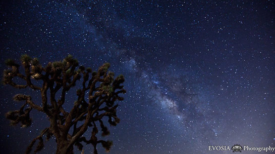 Joshua Tree Under the Milky Way on Vimeo by Henry Jun Wah Lee