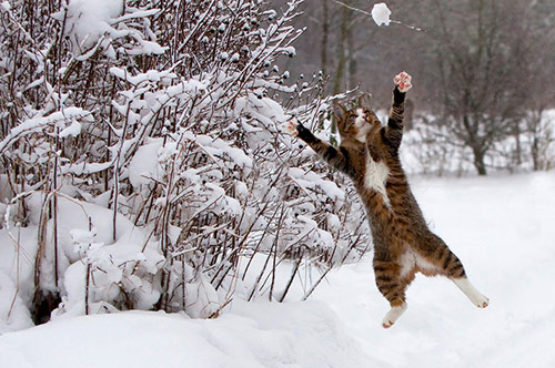 Catch the snow in Action Photos with Perfect Timing