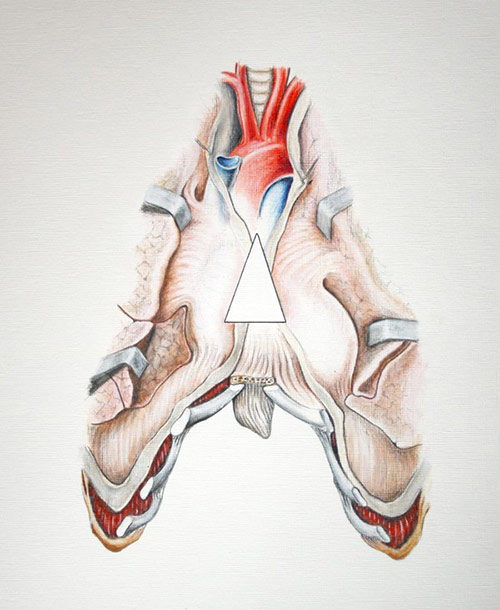 Anatomical Letter A