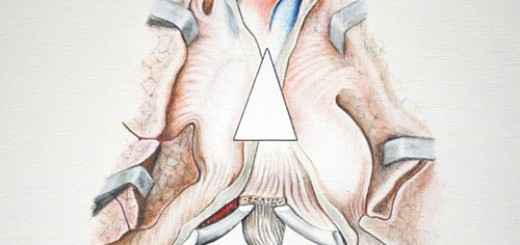 Anatomical-Letter-A