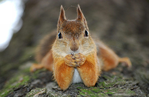 Squirrel in Cute Animals Pictures