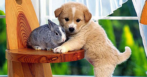 Friendship in Cute Animals Pictures