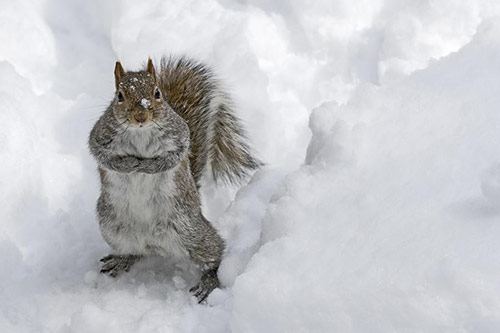 Squirrel Snow in Cute Animals Pictures