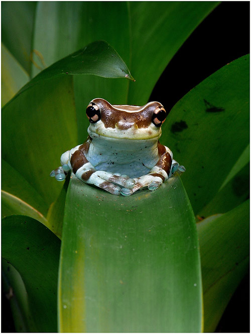 Frog in Cute Animals Pictures