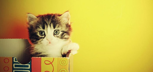 cute_look_kitten_cute_animals_pictures