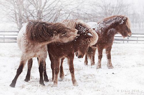 01 winter in Winter Wonderland: 34 Amazing Pictures of Animals