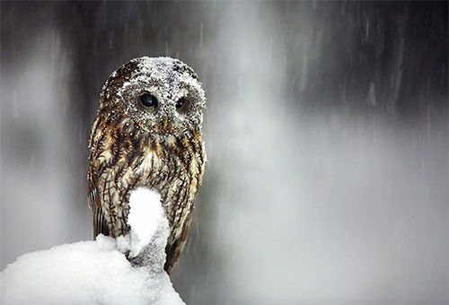 02 Pustik in Winter Wonderland: 34 Amazing Pictures of Animals