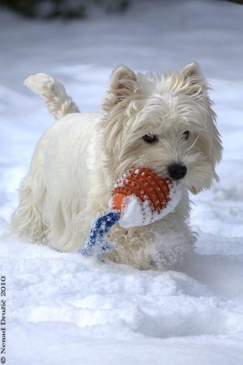 03 winter games in Winter Wonderland: 34 Amazing Pictures of Animals