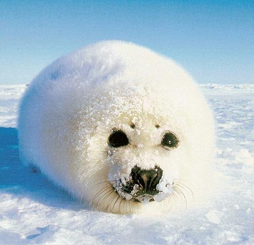 Amazing Pictures: Winter Wonderland: 34 Amazing Pictures Of Animals