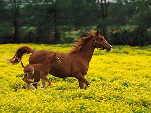Horse09