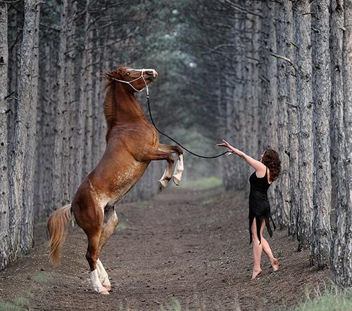Horse20