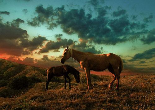 Horse25