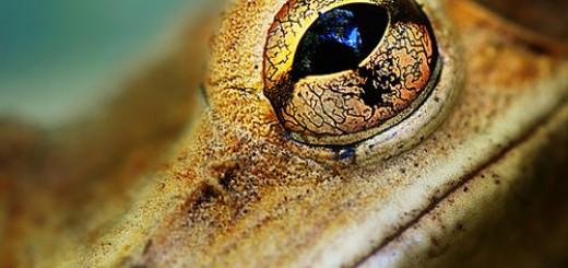 Tree-Frog-01