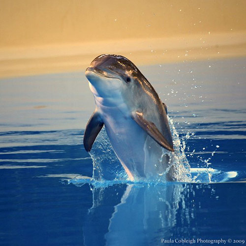 20 Beautiful and Cute Dolphin Pictures