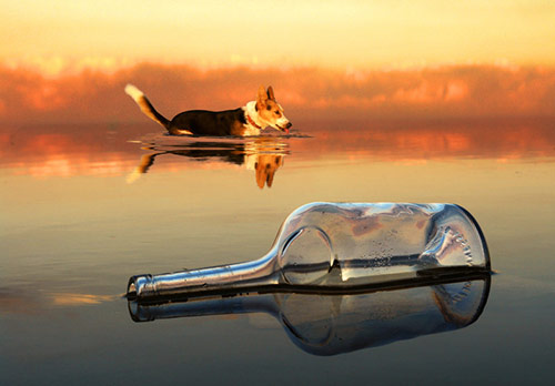 water reflection photography. water reflections reflection photography o