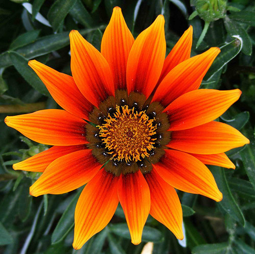 10-flower-in-naran-pakistan.jpg