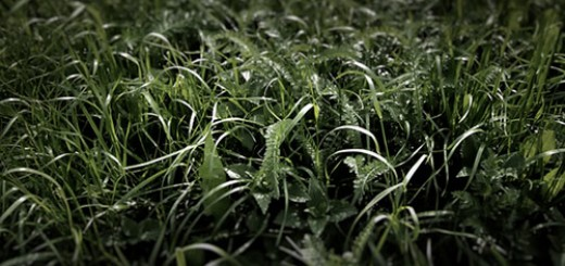 2 Pictures of Grass