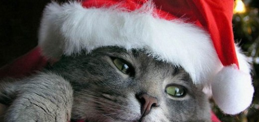 cat-christmas-mood