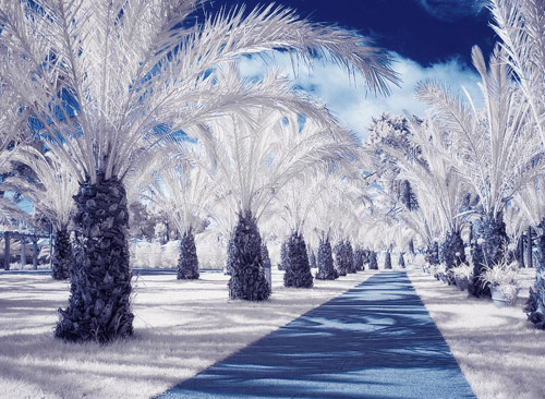 infrared winter wonderland 05