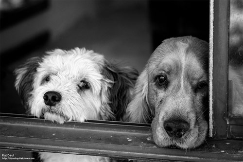 Dogs Waiting