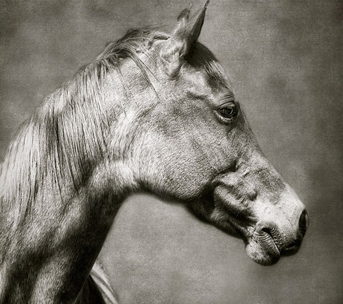 Amazing Horse Pictures