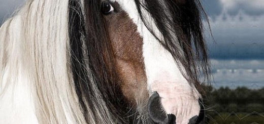 Horse Pictures 13