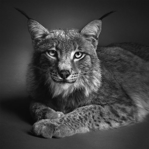 Dramatic Animal Portraits