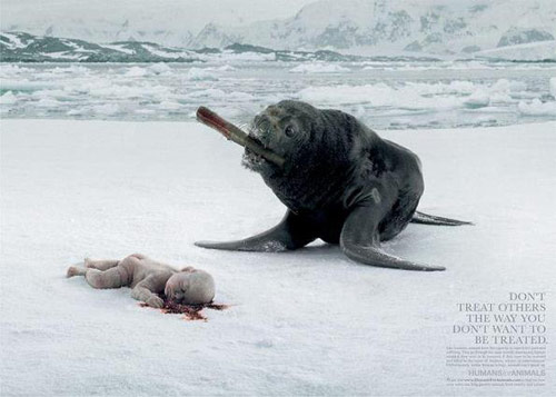 Humans for Animals: Seal - controversial print ads
