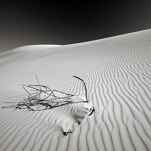blackandwhitephoto17 in Black and White Photography by Lance Ramoth