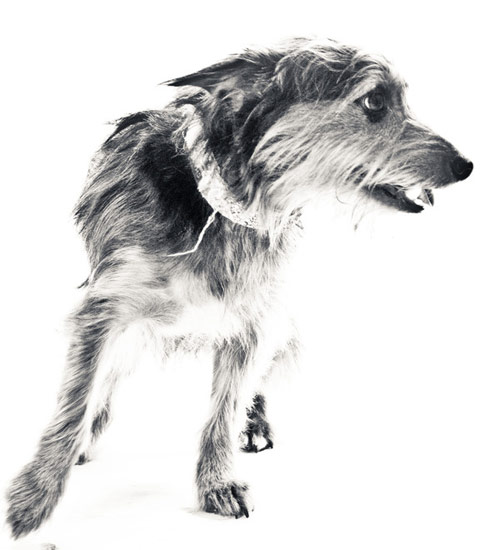 dog photography with white background