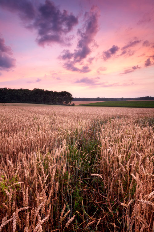 Summer Field in Landscape Photos