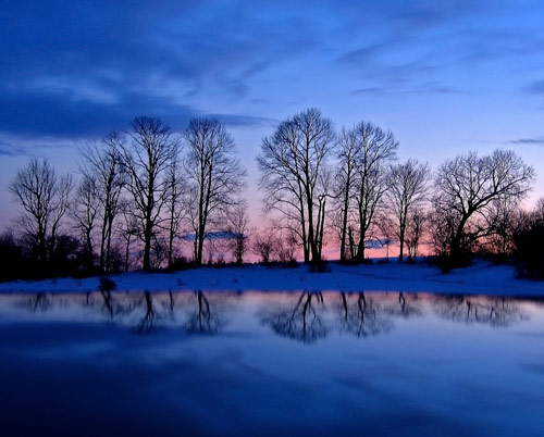 Winter Twilight Trees