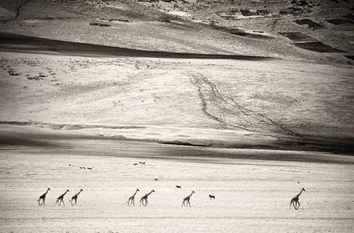 Giraffee Caravan