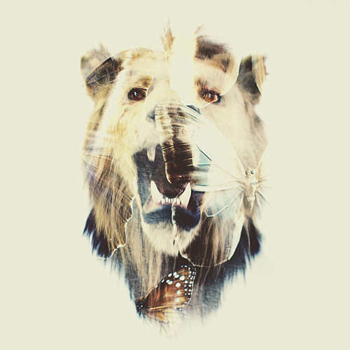The Butterfly Lion in Double Exposure Portraits