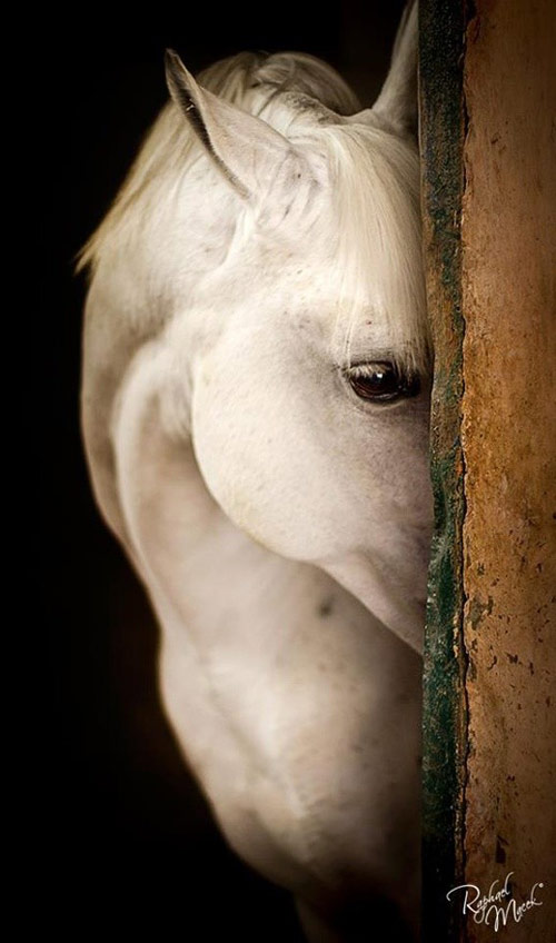 Horse Photography - Wonderful Horses Pictures for Inspiration