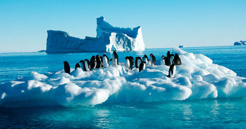 Antarctica at risk from flood of people in antarctica pictures