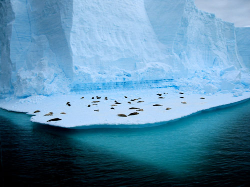 Living on Ice in antarctica pictures