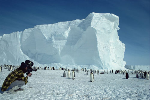Cameraman Doug Allan filming Emperor penguin colony, Antarctica in antarctica pictures