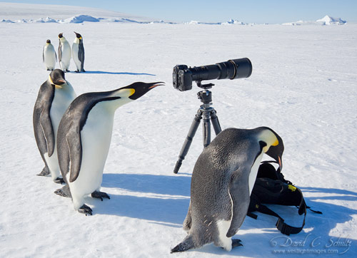 Polar Art Directors in antarctica pictures