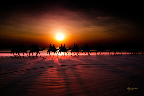 Shadow camels