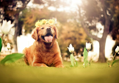 Be Happy - creative portraits of pet dogs