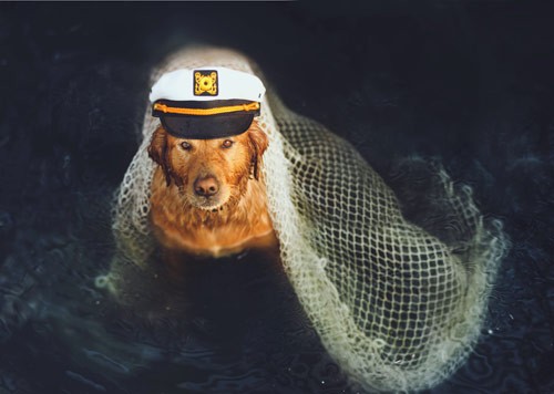 Shipwrecked - creative portraits of pet dogs