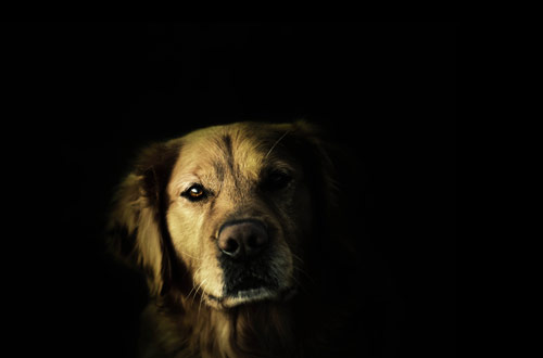 The Wise Dude - creative portraits of pet dogs