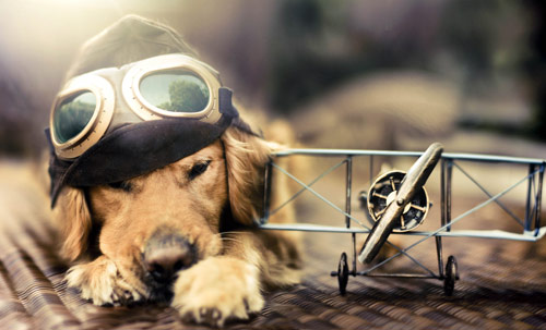 What To Do - creative portraits of pet dogs