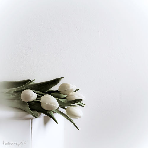 Minimalistic Photography - White Tulips