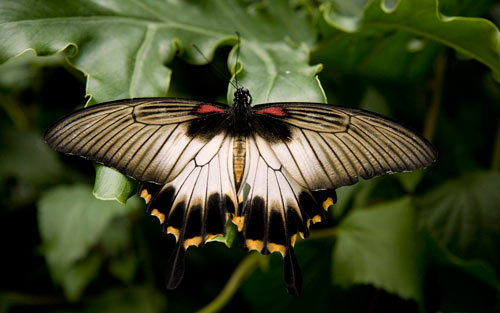 Butterfly from Botanic Garden